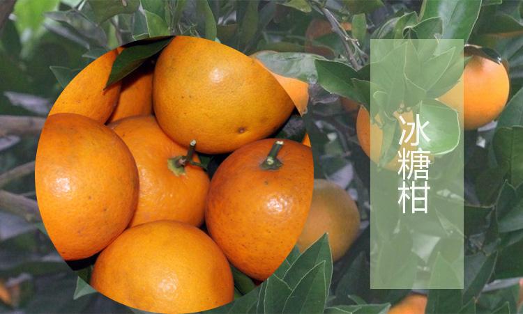 橙子树修剪效果图