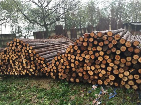 泰州水利工程杉木桩报价