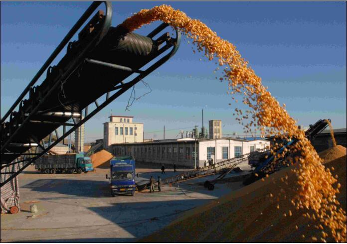 运输玉米图片/运输玉米样板图 (3)
