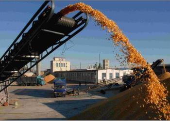 运输玉米图片