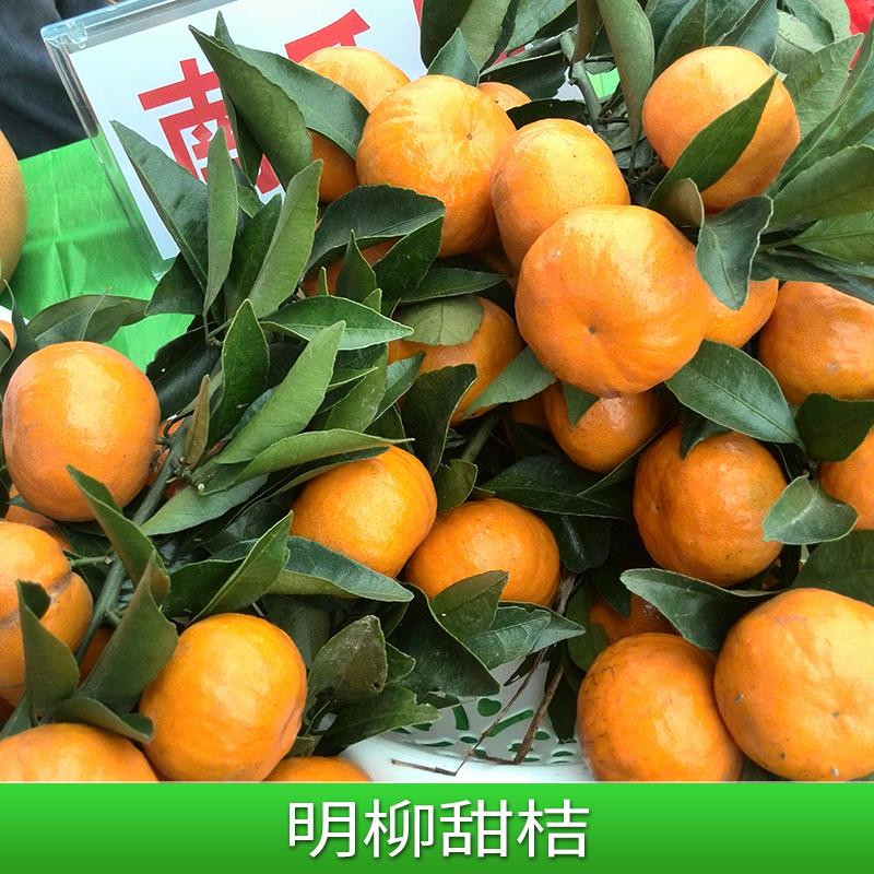 明日见柑橘苗_明日见柑橘苗价格_明日见柑橘苗批发基地_品种纯正