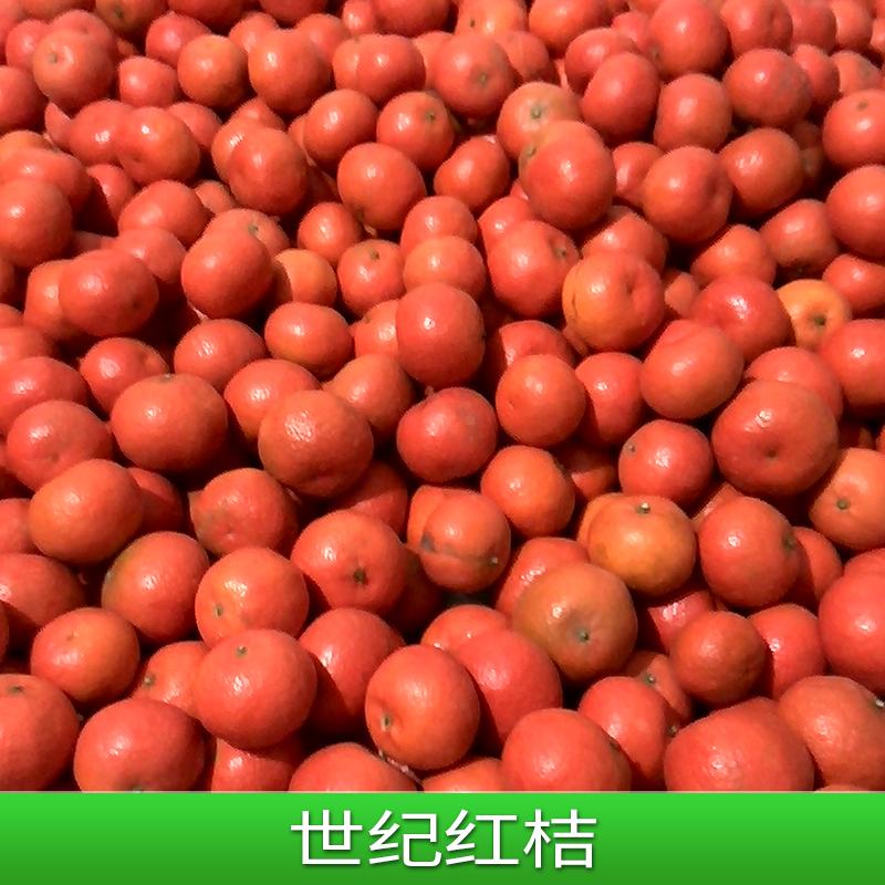 世纪红桔 大棚世纪红桔树苗 无菌世纪红桔果苗