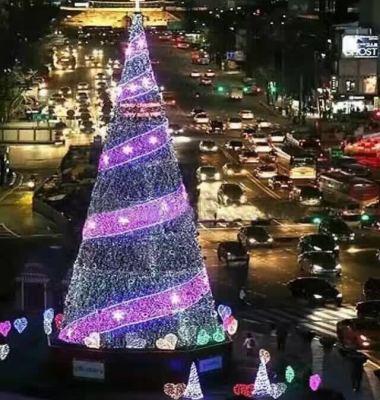 米圣诞树图片/米圣诞树样板图 (1)