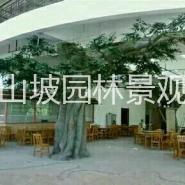 江苏仿真树图片