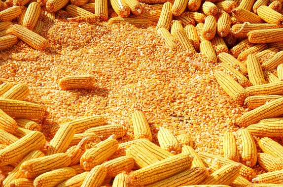 玉米·小麦、大豆、高粱、麸皮、