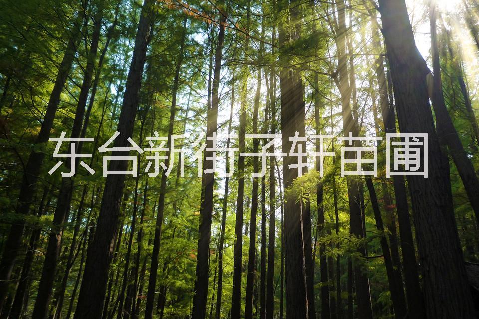 杉木风景图片大全