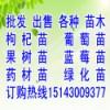 出售123苹果苗海棠苗樱桃苗果树图片