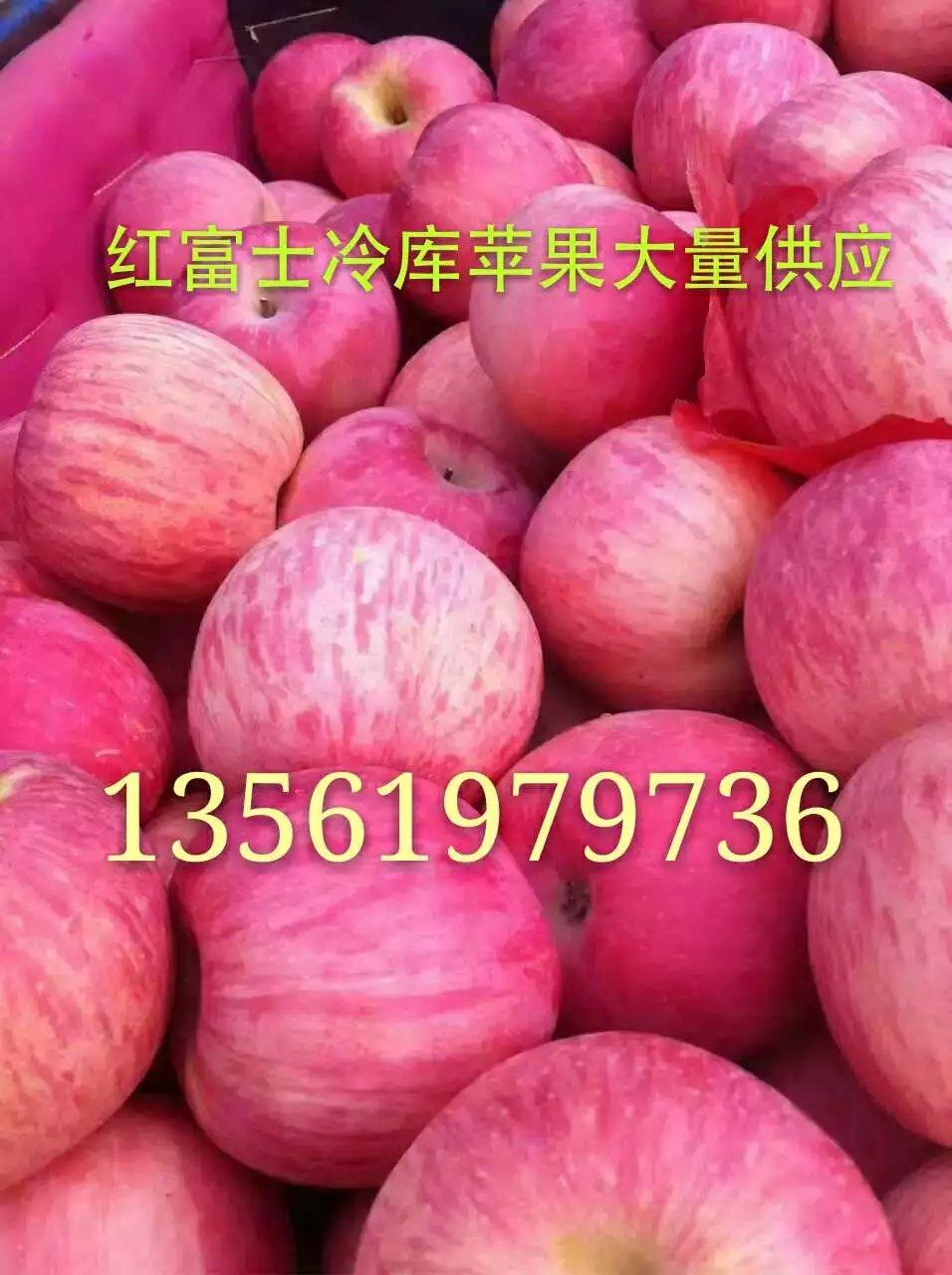 红富士苹果产地直销批发
