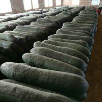 有机绿色青皮冬瓜