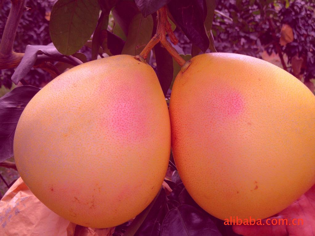 广州红肉蜜柚批发 广州红肉蜜柚价格广州红肉蜜柚价格多少钱