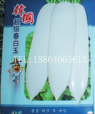 无青头 高产抗病 萝卜种子厂家批发韩国超级春白玉白萝卜种子