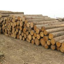 沈阳进口木材需要的单证批发