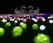 灯光展 玫瑰花灯 LED花灯图片
