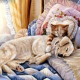 猫脑部发育不全的防治