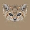 猫耳血肿的防治图片