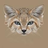 猫耳血肿的防治