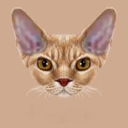 猫尿尿为什么会留个坑?图片