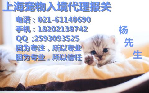 上海宠物报关公司、上海宠物猫/宠物狗进口报关、上海机场宠物报关