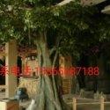山东仿真假树生产厂家图片