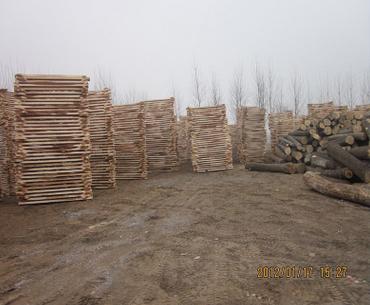 白椿木烘干板材 白椿木烘干板材厂家 白椿木烘干板材供应 河南白椿木烘干板材销售