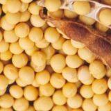 供应优质大豆 优质绿豆黄豆