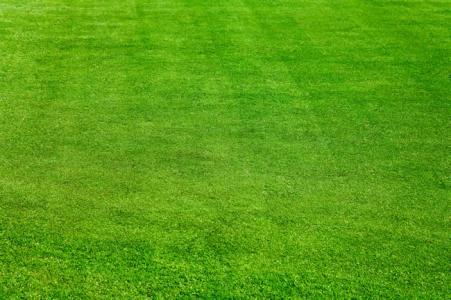 草坪专业种植 山东草坪专业种植 山东草坪价格