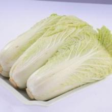 白菜批发白菜价格白菜厂家白菜供应山东白菜白菜基地代办白菜哪家好聊城白菜批发
