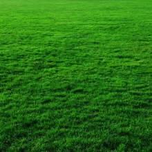草坪四季青