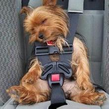 国内宠物托运联系电话 国内宠物专业托运 国内宠物托运公司哪家好