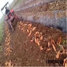红薯联合收获机地瓜收获机地瓜收获机视频块茎作物收获机厂家图片