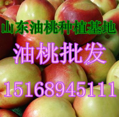 山东油桃批发价格 油桃价格多少钱