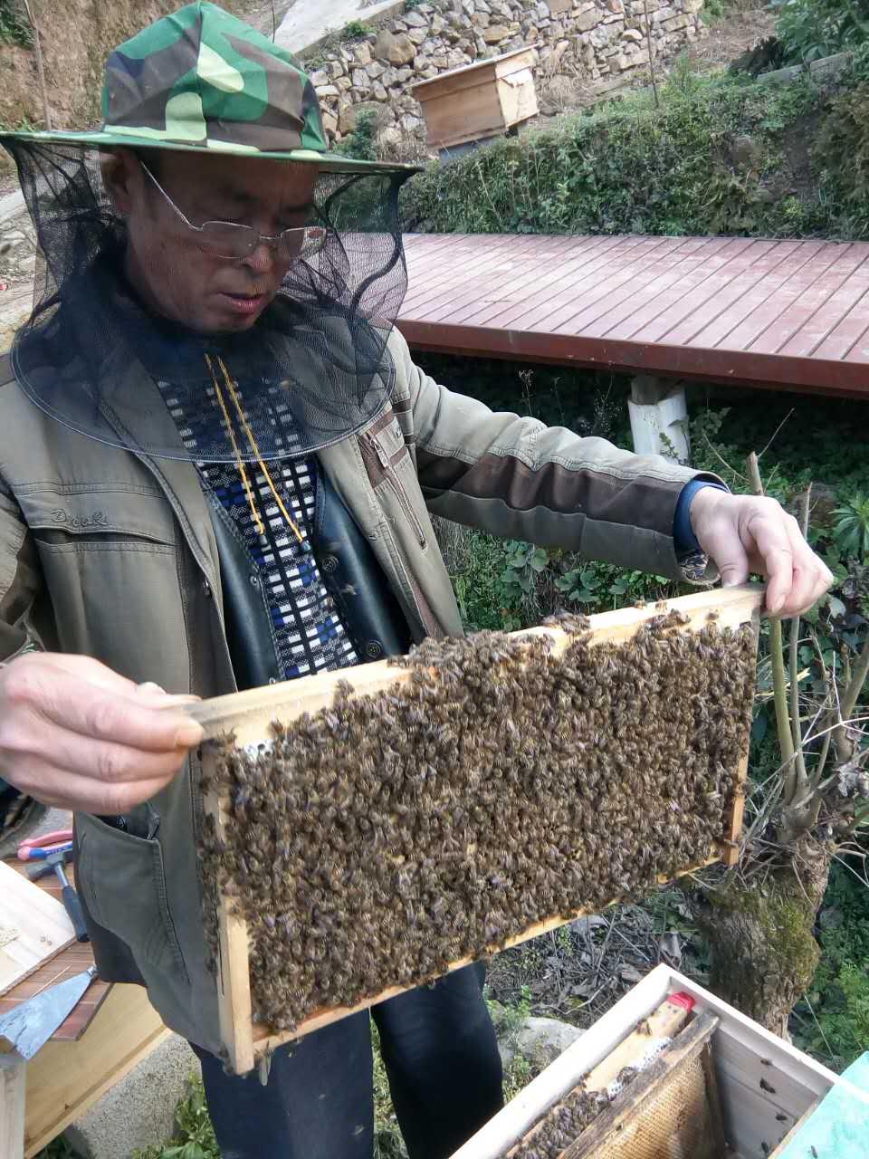 蜜蜂    中华蜜蜂   中蜂 贵州中蜂
