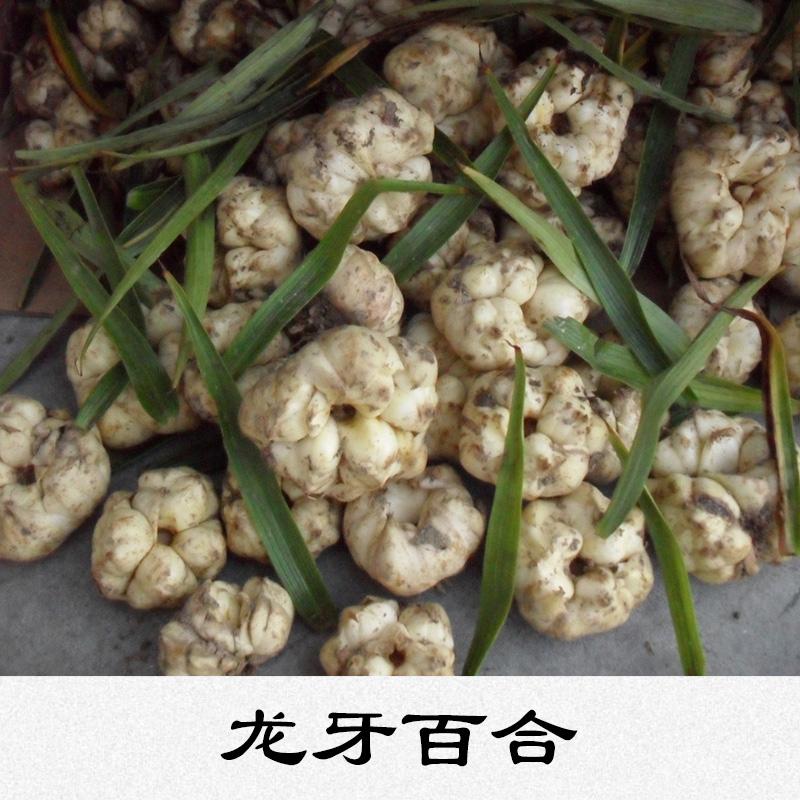 龙牙百合味淡不苦鳞茎球形营养丰富价格实惠龙牙百合生产基地