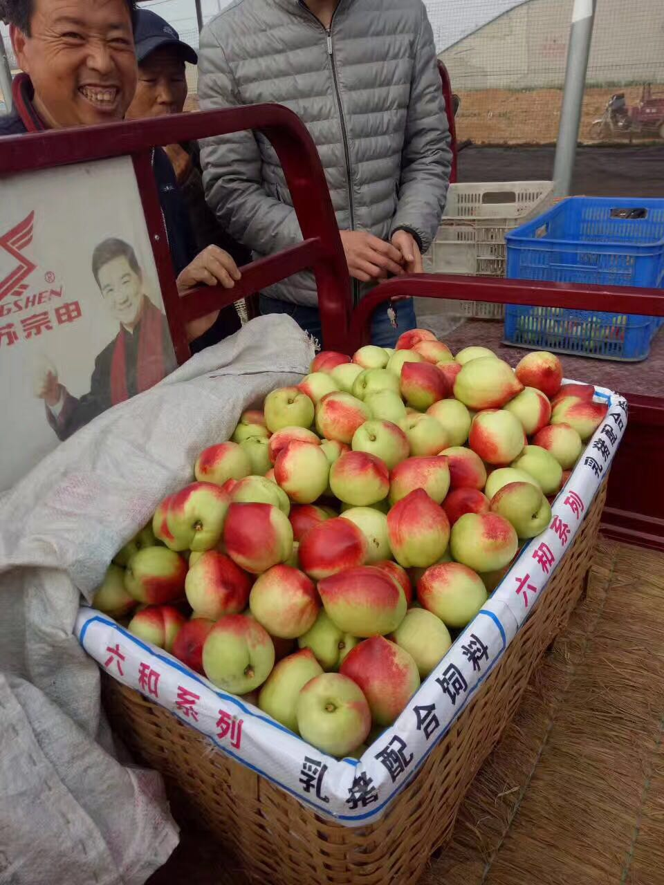 山东批发油桃、供应油桃场地、直销油桃、油桃销售、油桃热卖、油桃树