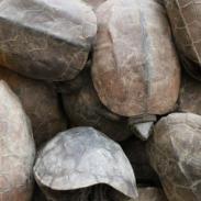 乌龟养殖技术图片
