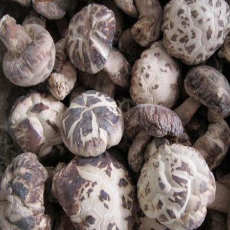 七景山椴木香菇种植基地供应一级椴木香菇批发价格每件500克装