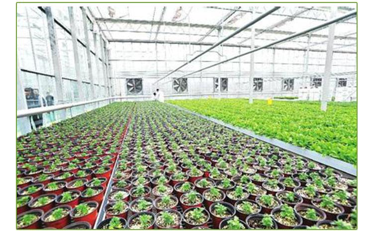 河北温室大棚  花卉温室大棚设计 温室大棚施工  温室大棚报价