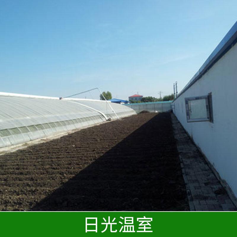 日光温室温室钢管大棚保温好投资低节约能源价格实惠日光温室厂家直销 邯郸日光温室
