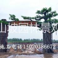 菏泽假树大门图片