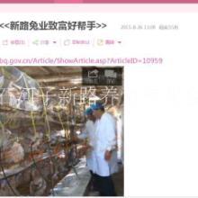 养殖兔子肉兔种兔獭兔新疆种兔合作社养殖兔子厂家直销