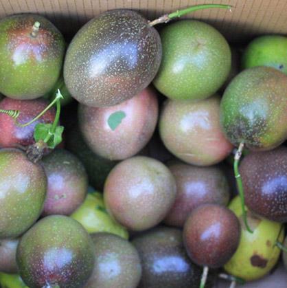 广西百香果 越南百香果 越南进口百香果批发
