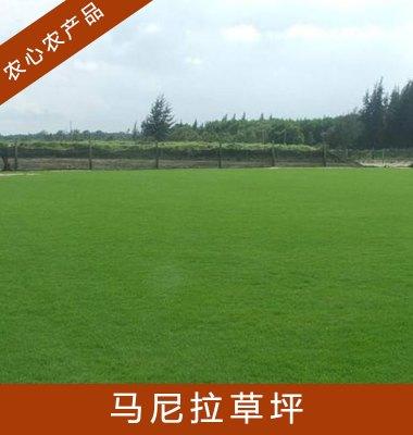 马尼拉草坪图片/马尼拉草坪样板图 (1)