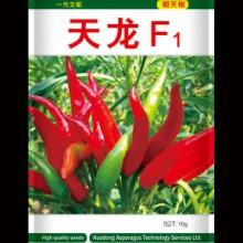山东曹县正品蔬菜朝天椒种子 天龙F1  高产辣椒籽蔬菜蔬果种子批发