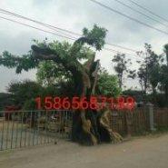 仿真假树做法 哪里有做仿真假树的 仿真水泥假树来图定制
