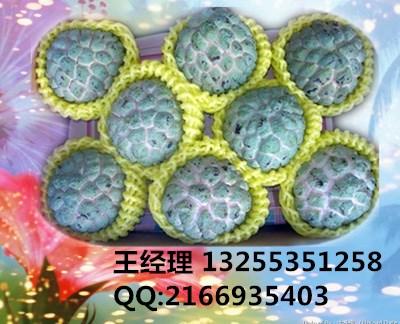 玫瑰花网套图片/玫瑰花网套样板图 (1)