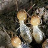 贺州市灭白蚁公司 灭白蚁