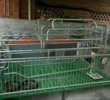 母豬產床單雙體母豬分娩床高培產仔欄豬用產床養豬設備配件保溫箱電熱板圖片