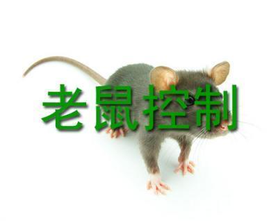 清新区杀虫消毒服务公司 清新灭鼠杀虫消毒服务电话 清新区周围灭鼠杀虫消毒