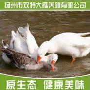 雪雁品种图片