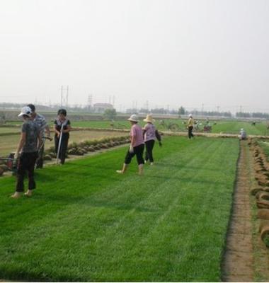 草坪图片/草坪样板图 (2)